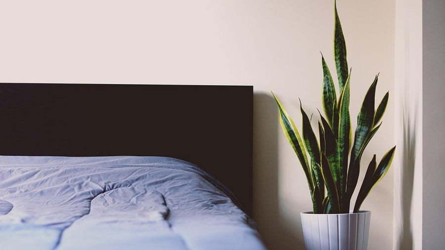 environmentally friendly master bedroom