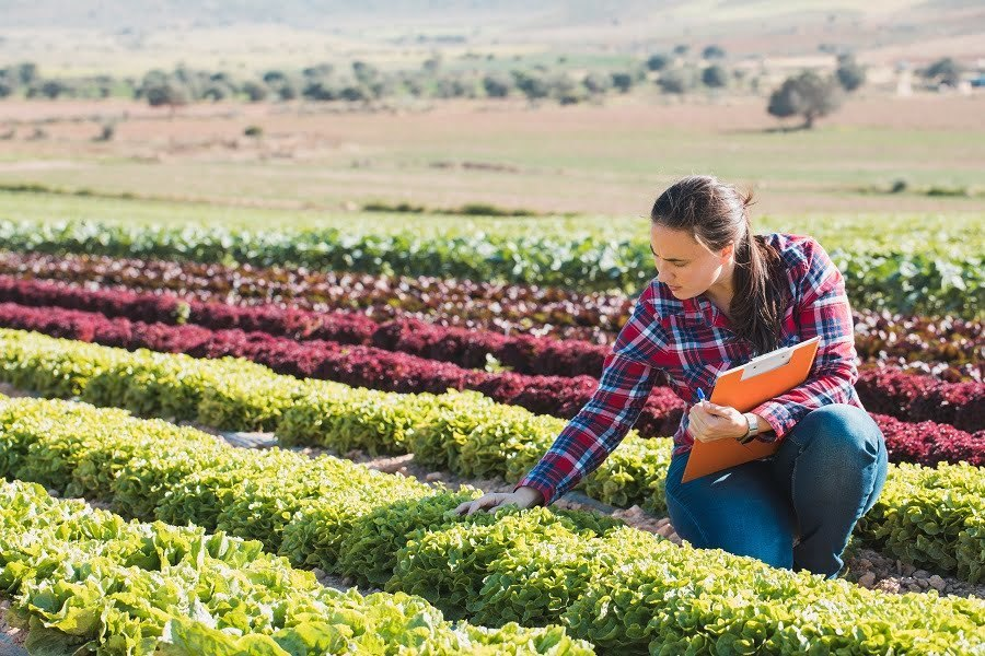 sustainable agroculture